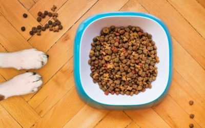 Pet Food Case Study – Healthy Food, Happy Pets